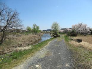 hotaru-sakura16.jpg