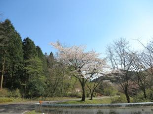koegatawa10.jpg