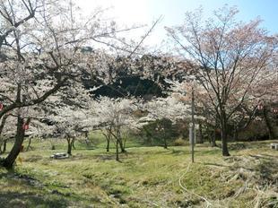 koegatawa12.jpg