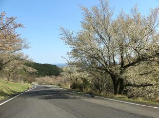 koegatawa17.jpg