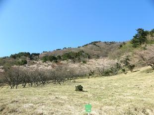 koegatawa21.jpg