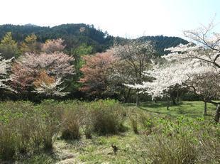 koegatawa29.jpg