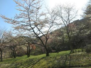 koegatawa30.jpg