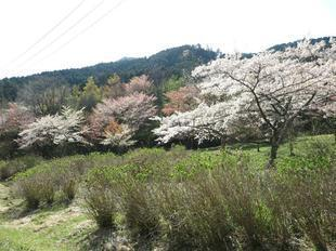 koegatawa4.jpg