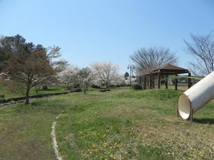 noda-sakura5.jpg