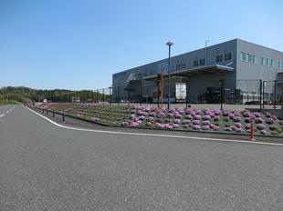 shibazakura08.jpg