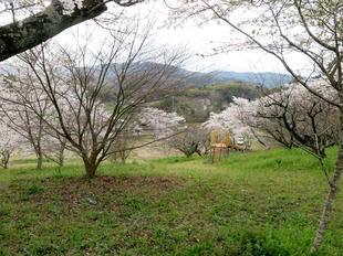 shitori-koen12.jpg