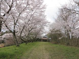 shitori-koen14.jpg