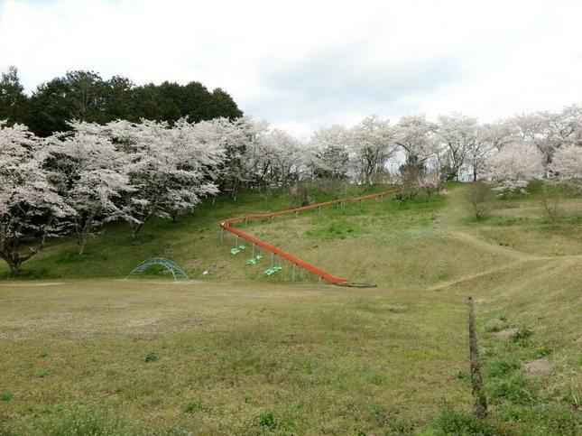 shitori-koen4.jpg