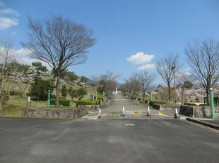 syoboku-sakura27.jpg