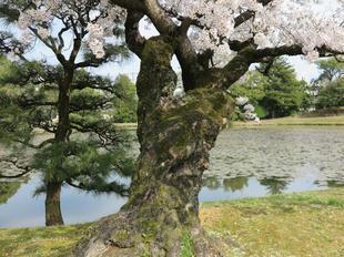 syuraku4-4-16.jpg