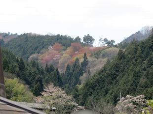 yanagi-comi7.jpg