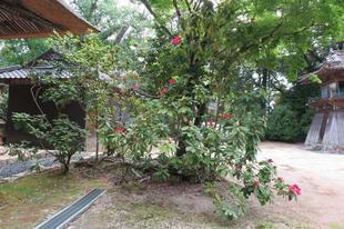 honzanji5-17-3.jpg