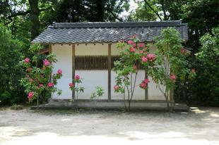 honzanji5-23-14.jpg