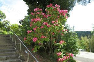 honzanji5-23-33.jpg