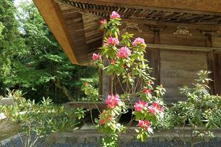 honzanji5-23-9.jpg