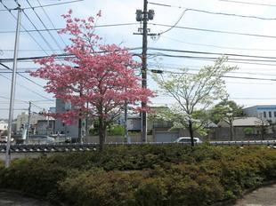 ishisaka02.jpg