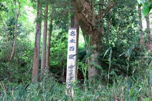 nanairogashi5-24-1.jpg