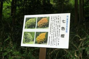 nanairogashi5-24-2.jpg