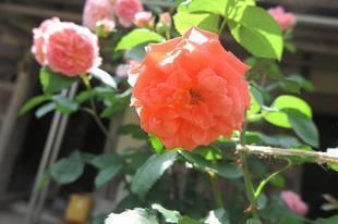 yoshimura-5-27-27.jpg