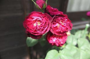 yoshimura-5-27-29.jpg