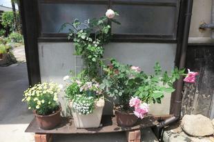 yoshimura5-1-4.jpg