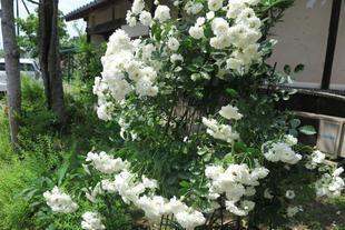 yoshimura5-1-5.jpg