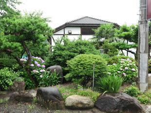mimaoka-ajisai49.jpg