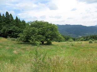 daigasen22.jpg