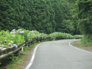 oyama-ajisai26.jpg