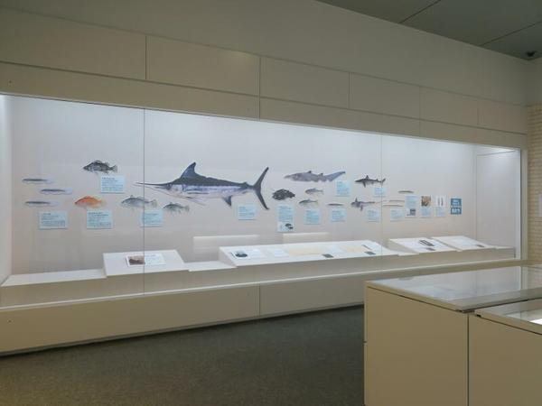 津山洋学資料館夏季企画展 箕作博士の水族館
