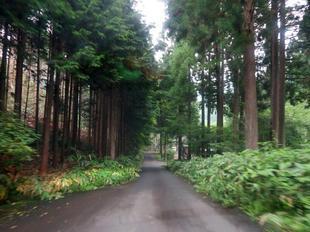 kamokuroki01.jpg