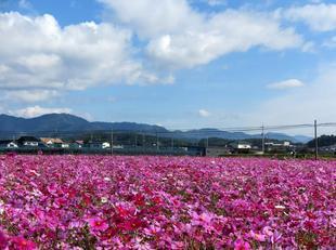 kagamino-cosumo12.jpg