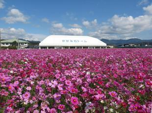 kagamino-cosumo13.jpg
