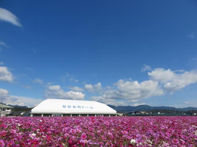 kagamino-cosumo14.jpg