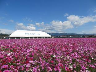 kagamino-cosumo15.jpg