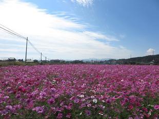 kagamino-cosumo17.jpg
