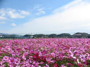 kagamino-cosumo3.jpg