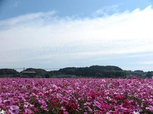 kagamino-cosumo4.jpg