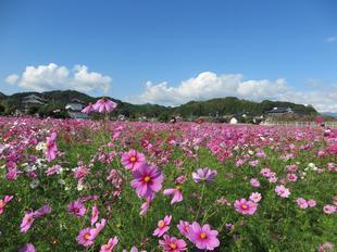kagamino-cosumo6.jpg