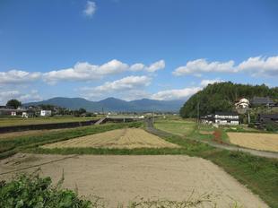 tanokuma-kosumosu12.jpg