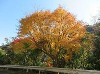 11-12-tsugawa10.jpg