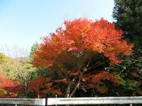 11-17tsugawa23.jpg