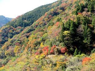 kouyou-kenhoku1.jpg