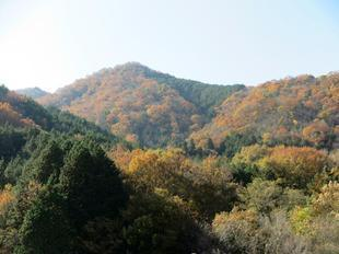 sarayamachikunoaki15.jpg