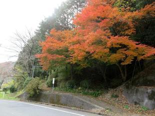sarayamachikunoaki42.jpg