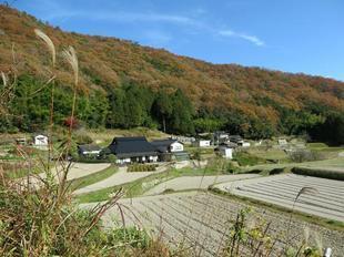 sarayamachikunoaki6.jpg