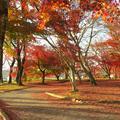 夕日に映える津山城(鶴山公園)の紅葉が奇麗です。