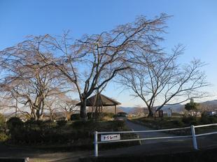 kagurao2020-25.jpg