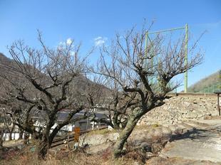 houkoku-onegoya18.jpg